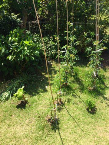 0521の家庭菜園