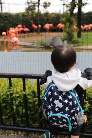 0311の動物園