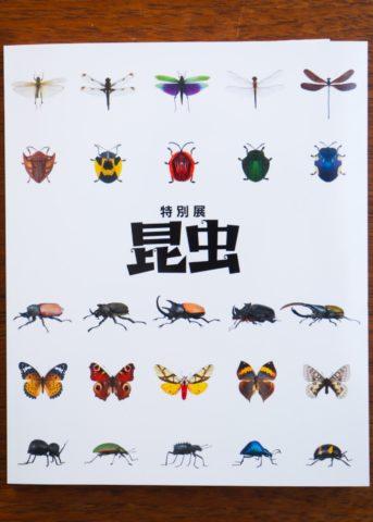 0825の昆虫展