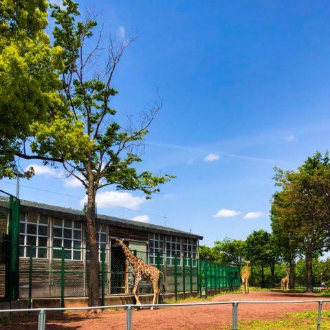 0429の動物園